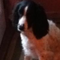 Photo de profil de Molly