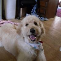 Photo de profil de Teddy