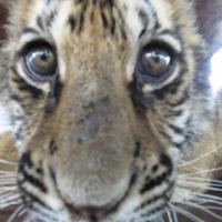Photo de profil de Byli