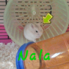 Photo de Nala