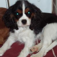 Photo de profil de Gaellia du mont berrue