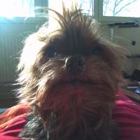 Photo de profil de Tékila