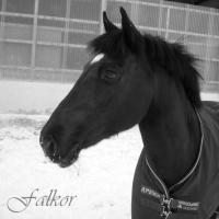 Photo de profil de Falkor