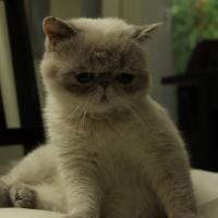 Photo de profil de Doriane