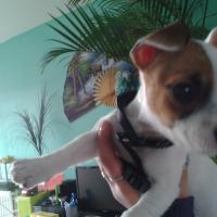 Photo de profil de Dutsy