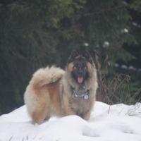 Photo de profil de Altesse