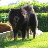 Photo de profil de Vulko