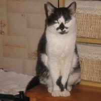 Photo de profil de Moustache