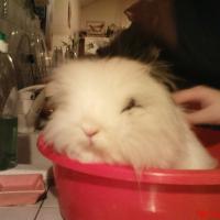 Photo de profil de Aglaë