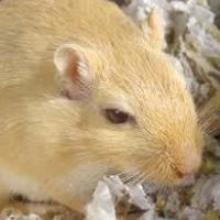 Photo de profil de Jeckel