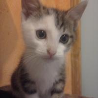Photo de profil de Panache