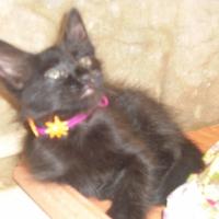 Photo de profil de Blinko