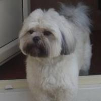 Photo de profil de Daïko
