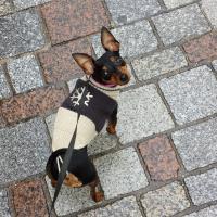 Photo de profil de Roxy