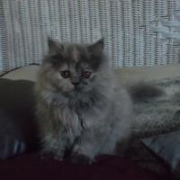 Photo de profil de Michat