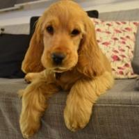 Photo de profil de Bonnie