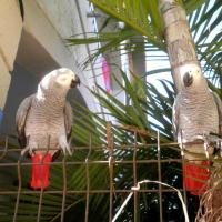 Photo de profil de Haddock & Tango