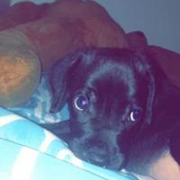 Photo de profil de Jeko