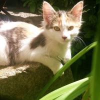 Photo de profil de Kadett