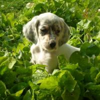 Photo de profil de Lucky
