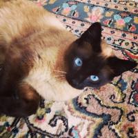 Photo de profil de Chouchou