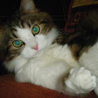 Photo de profil de HELIOS