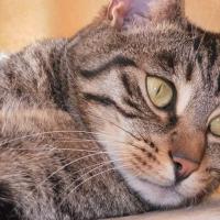 Photo de profil de Picsou