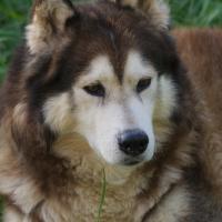 Photo de profil de Galak