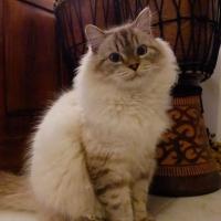 Photo de profil de Berlioz