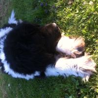Photo de profil de Adagio