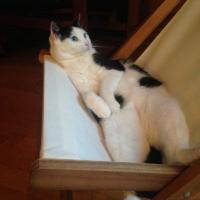Photo de profil de Soledad