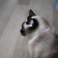 Photo de profil de melodie