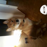 Photo de profil de Kenzo