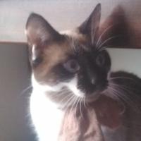 Photo de profil de Chasha