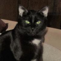 Photo de profil de Hathor