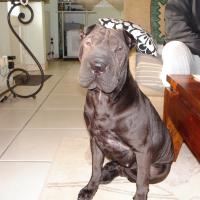 Photo de profil de baghera