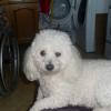 Photo de Dolly