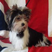 Photo de profil de Rovena