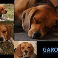 Photo de profil de Garou