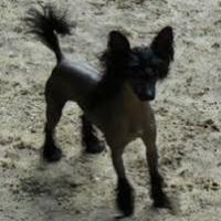 Photo de profil de Gizmo