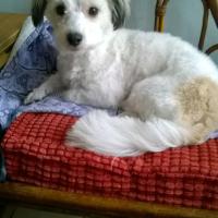 Photo de profil de Zoa