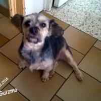 Photo de profil de Guizmo