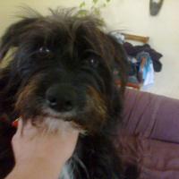 Photo de profil de Séga