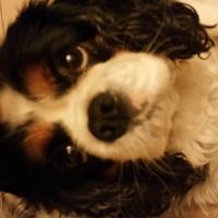 Photo de profil de Canelle