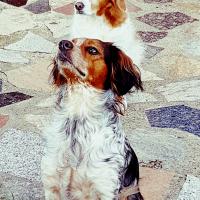 Photo de profil de Dolly et judie