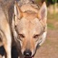 Photo de profil de stephen