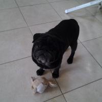Photo de profil de Enzo