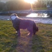 Photo de profil de Sirius