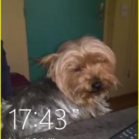 Photo de profil de pisani Hugo