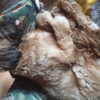Photo de profil de Ianka